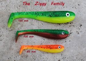 Ziggy_3_vel800